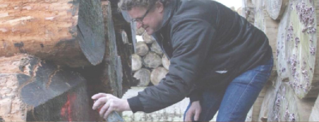 Het selecteren van hout